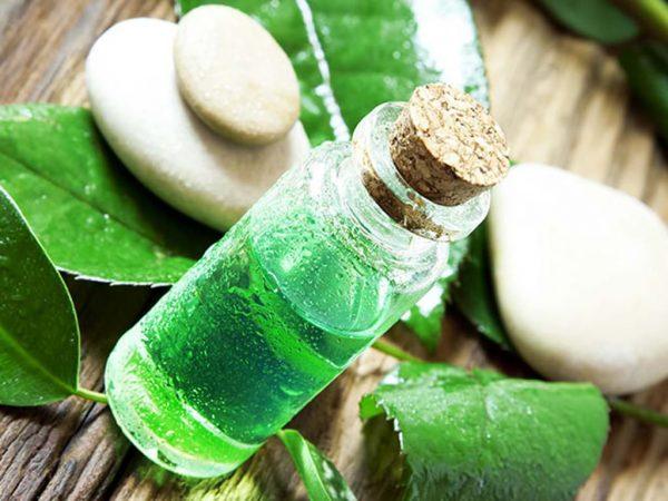 Tinh dầu trà chanh giúp trị mụn ở cổ hiệu quả