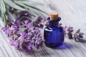 Tinh dầu oải hương khiến trị mụn ở cổ hiệu quả