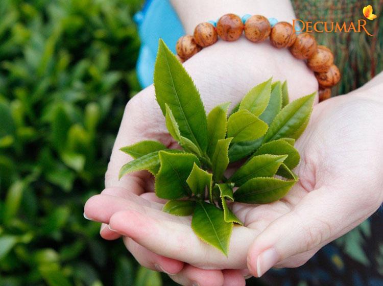 Đun lá trà xanh để tắm khiến tình trạng mụn viêm giảm thiểu đáng kể