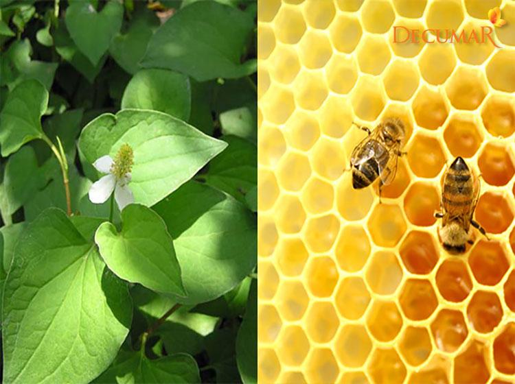 Rau diếp cá và mật ong