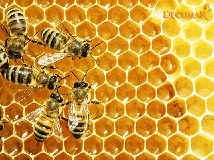 Tổ ong