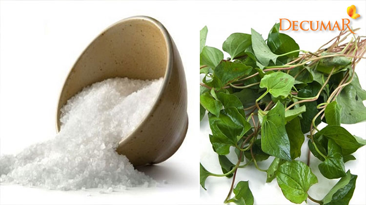 Công thức trị sẹo thâm bằng rau diếp cá và muối