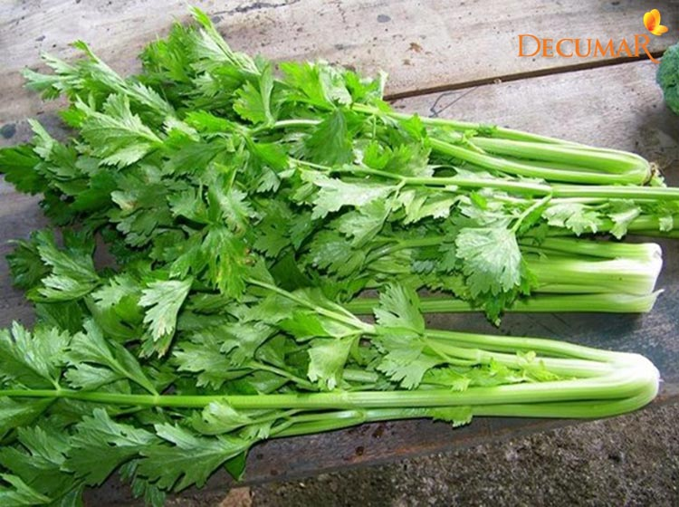 Sử dụng rau cần tây trị sẹo thâm ghẻ ở chân