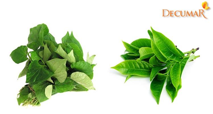 Rau diếp cá và lá trà xanh