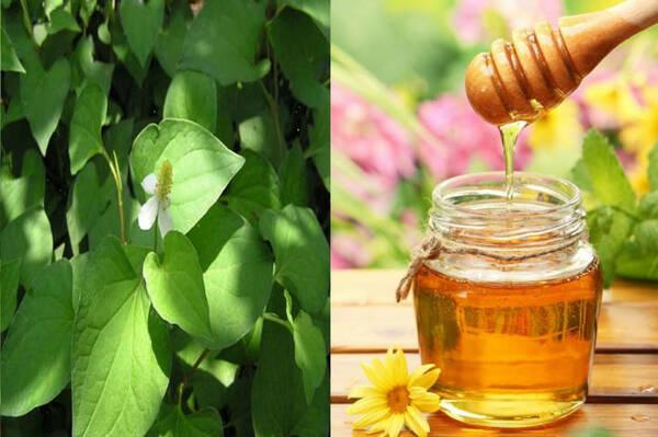 Mật ong và rau diếp cá trị mụn ẩn